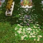 ذهبت لزيارة زوجها المتوفي فماتت في قبره