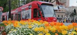 مهرجان الزنبق التاسع..  20 مليون زنبقة في منتزهات اسطنبول