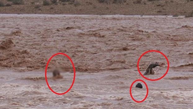 فاجعة .. ارتفاع حصيلة ضحايا الفيضانات إلى 32 قتيلا وإنقاذ 214