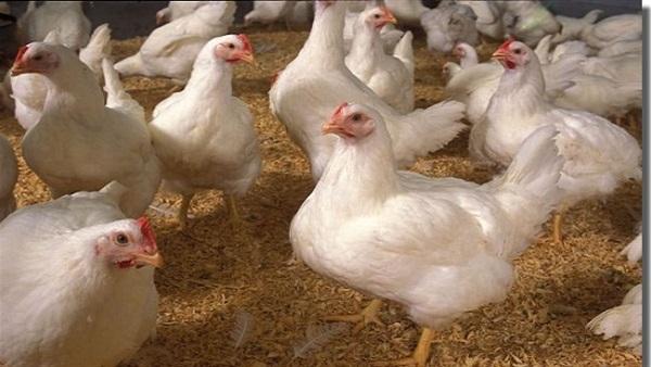 اكتشاف حالة ثانية لأنفلونزا الطيور في ألمانيا.