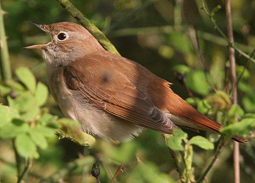 طيور تمتلك ما يشبه جهاز إنذار من الأعاصير لا يملكه البشر.