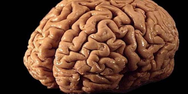 الدماغ هو المسؤول عن الكسل واللامبالاة.