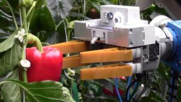 """ذراع آلية """"ذكية"""" تفرز الفاكهة دون إهدار للثمار الهشة"""