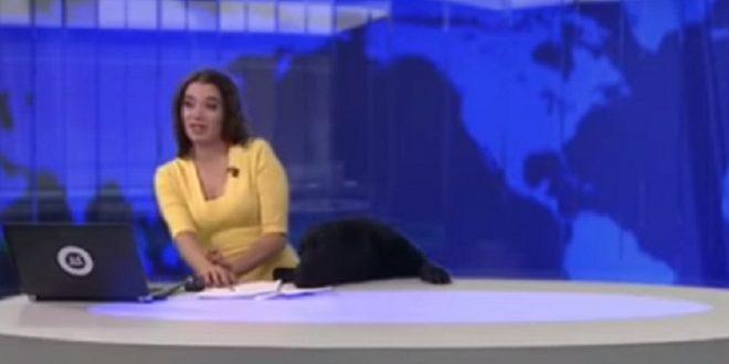 ملايين المشاهدات.. كلب يقتحم نشرة الأخبار ويفاجئ مذيعة روسية