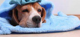 إنفلونزا الكلاب الجديدة قد تكون قاتلة للبشر
